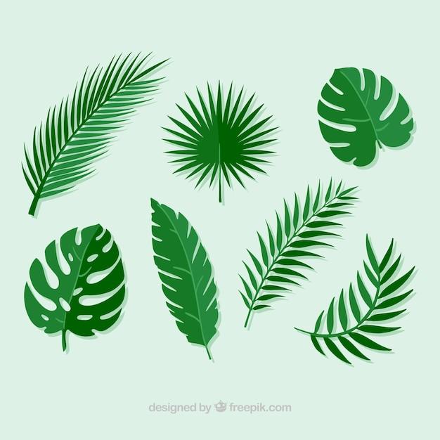 Image Result For Palm Leaf Template Printable