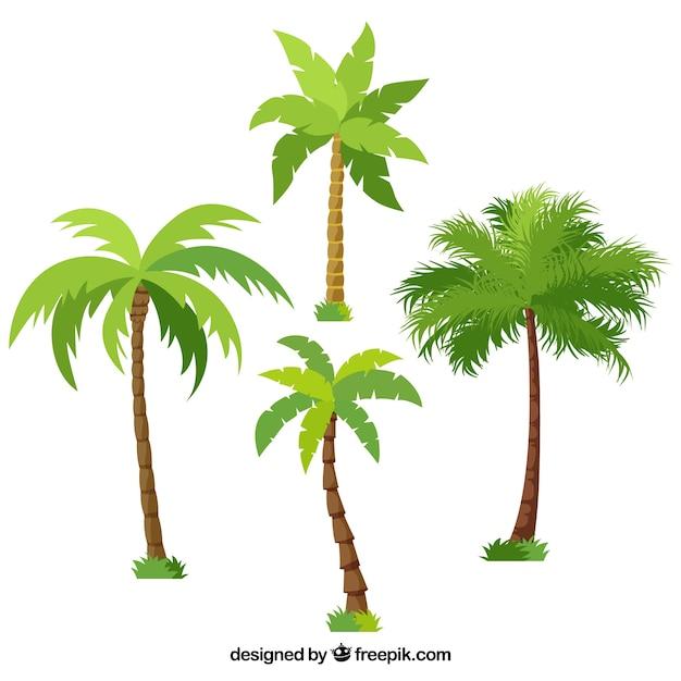 Packung von verschiedenen palmen Premium Vektoren