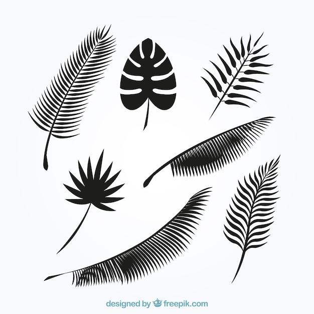 Palme blätter silhouetten sammlung Kostenlosen Vektoren