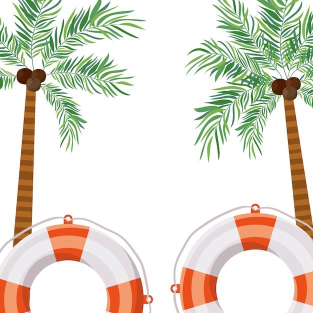 Palme mit kokosnuss im weißen hintergrund Premium Vektoren