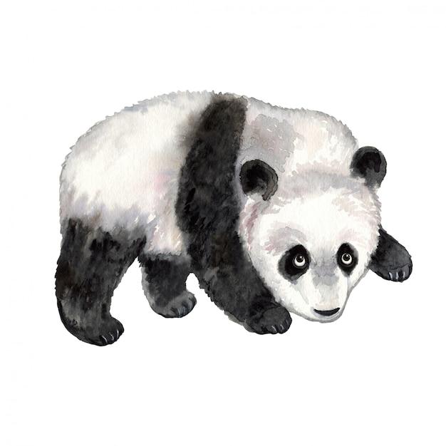 Panda aquarell tier Premium Vektoren