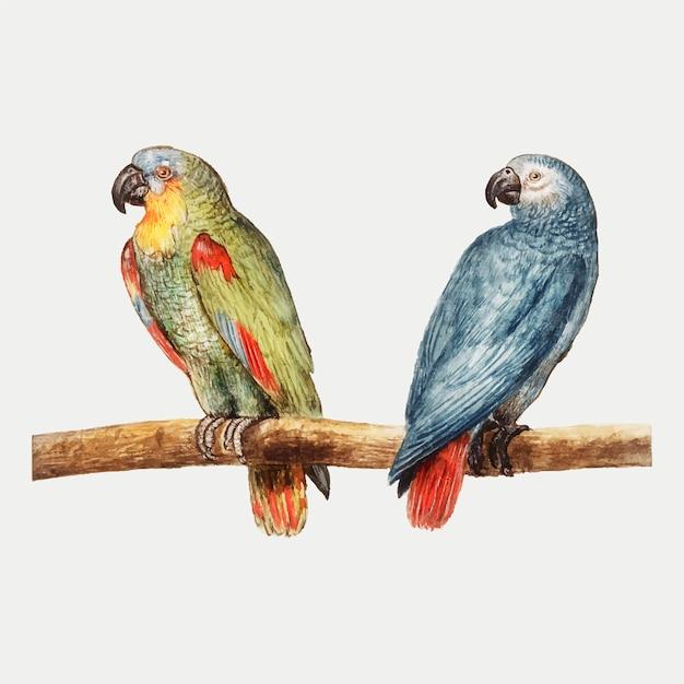 Papageien im vintage-stil Kostenlosen Vektoren