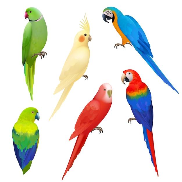 Papageien realistisch. wildtierflug exotische farbige vögel schöne amazonas tropische leben papageien illustrationen. illustration papagei vogel realistische, tropische tierwelt Premium Vektoren