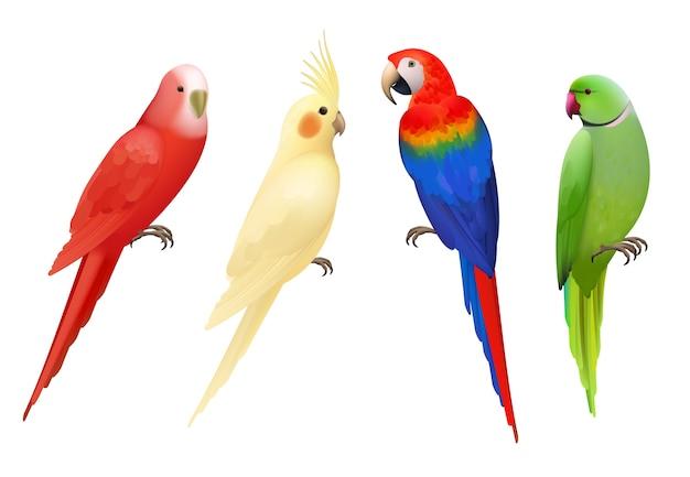 Papageien. tropische bunte exotische vögel aras natur tiere realistische papageien sammlung. realistischer vogelpapagei, bunte tierfaunaillustration Premium Vektoren