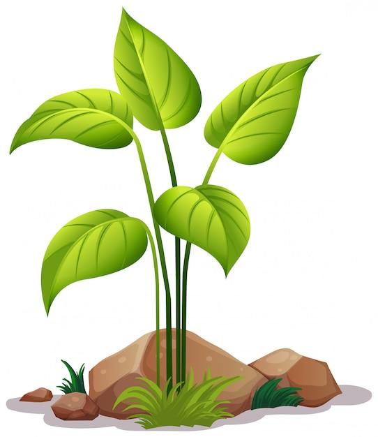 Pflanze auf weiß Kostenlosen Vektoren