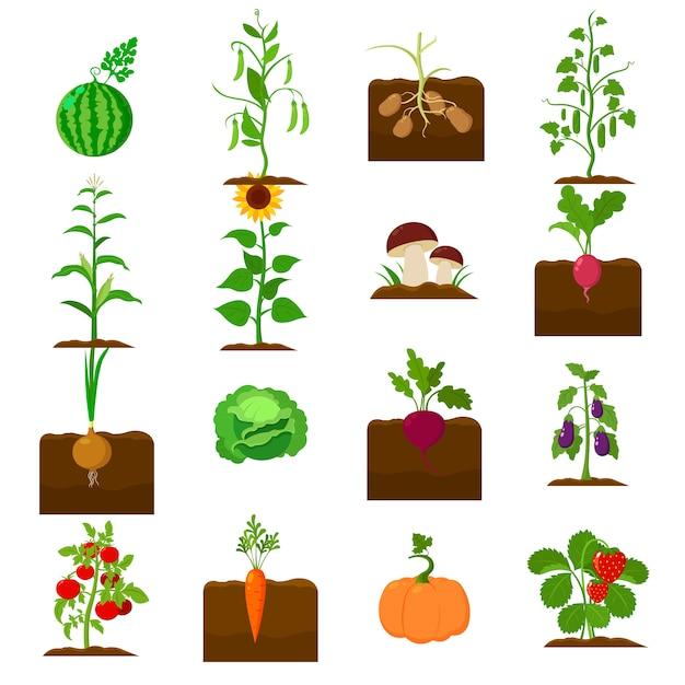 Pflanzen cartoon vektor icon set. vektorabbildung des betriebsgemüses. Premium Vektoren