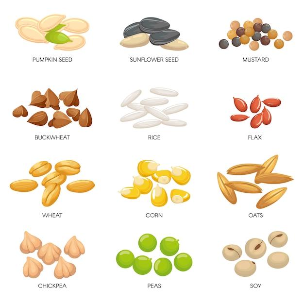 Pflanzensamen. getreidekörner, kichererbsen nüsse und zellulose getreide. nuss und samen lokalisierten karikaturillustration Premium Vektoren