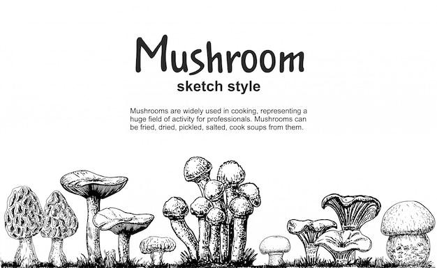 Pilzgrenze, handgezeichnete skizzensammlung. nahtlose grenze der pilzzeichnung. isolierte lebensmittelrahmenskizze. champignon, morchel, steinpilze, austern, pfifferlinge. für menü, etikett, produktverpackung Premium Vektoren