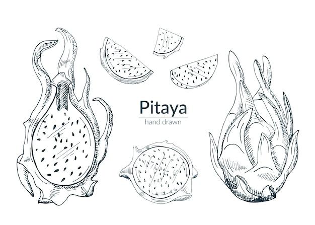Pitaya ganz, geschnitten, halb. eine reihe von isolierten elementen in monochrom. skizzieren. Premium Vektoren