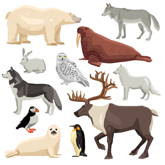Polare tiere eingestellt Kostenlosen Vektoren