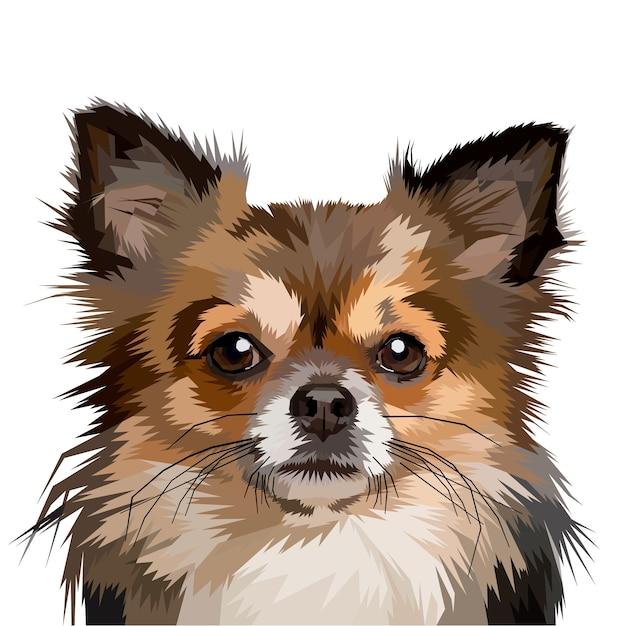 Pommerschen hundekopf Premium Vektoren