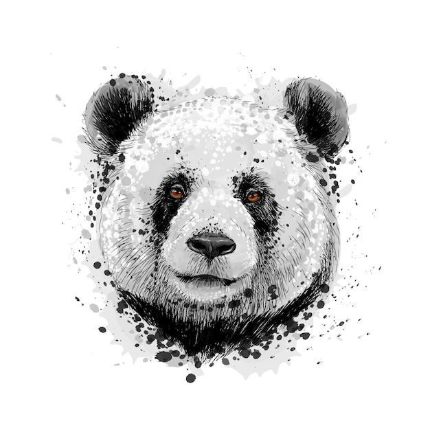 Porträt eines pandabären von einem spritzer aquarell, handgezeichnete skizze. vektorillustration von farben Premium Vektoren