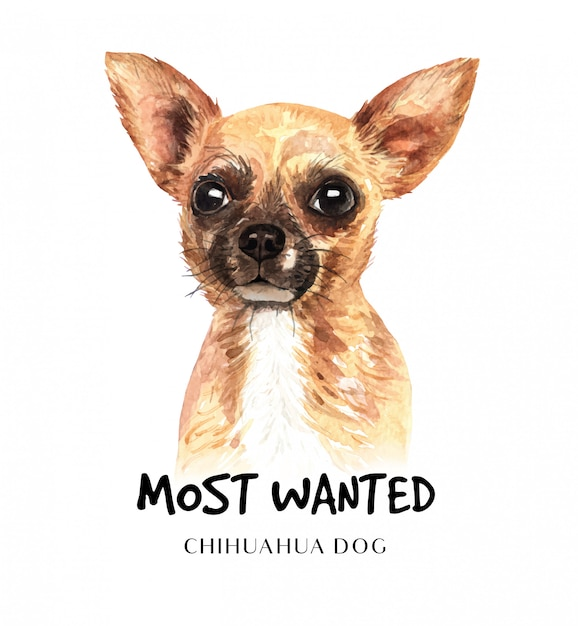 Portrait-chihuahuahund für den druck Premium Vektoren
