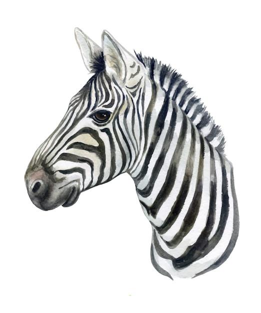 Portraitof ein zebrapferd getrennt. aquarell Premium Vektoren