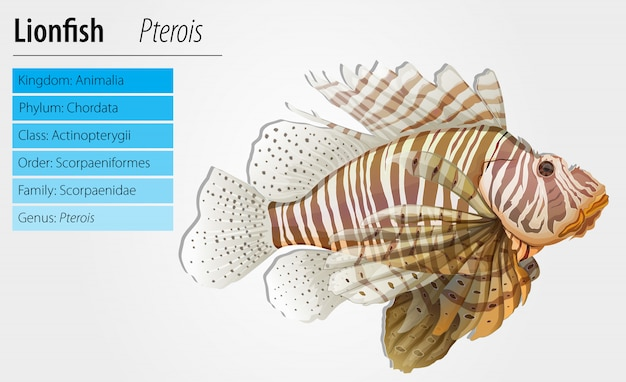 Pterois-antennen Kostenlosen Vektoren