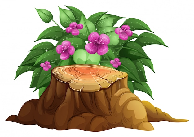 Purpurrote lilienblumen mit blättern Kostenlosen Vektoren