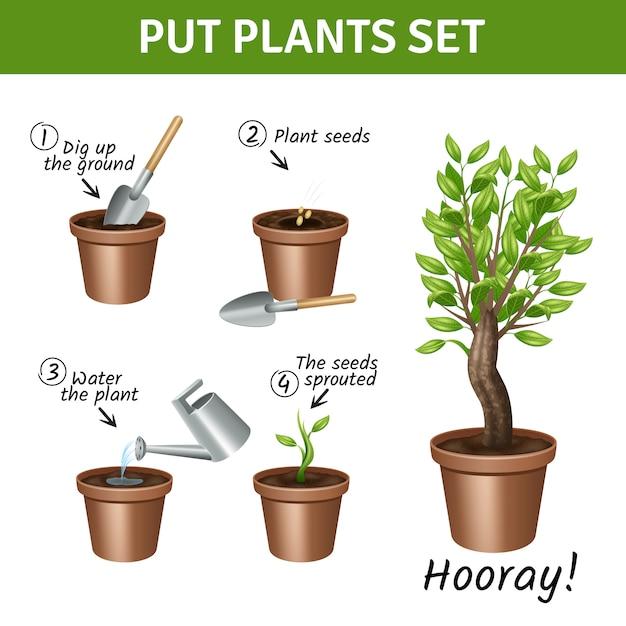 Putting und anbau von pflanzen anleitung mit töpfen wasser und samen realistische symbole gesetzt Kostenlosen Vektoren