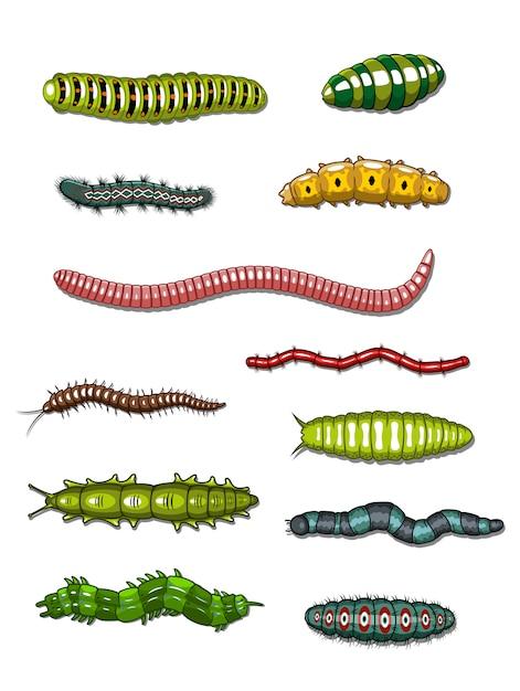 Raupen und würmer Premium Vektoren