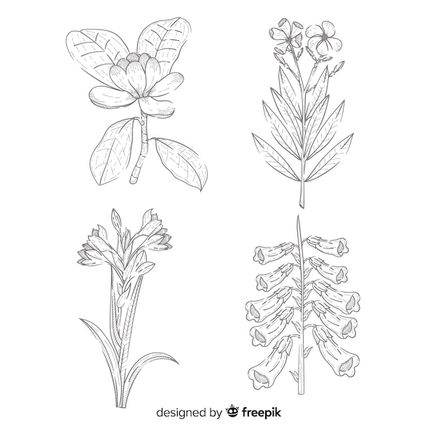 Realistisch gezeichnet mit botanikblumensammlung Kostenlosen Vektoren