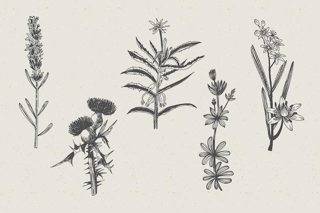 realistisch gezeichnete kräuter  wildblumen  kostenlose