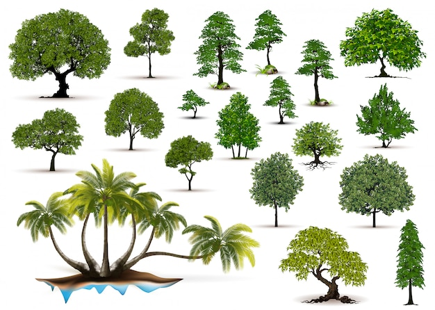 Realistische bäume der ansammlung getrennt auf weißem hintergrund Premium Vektoren