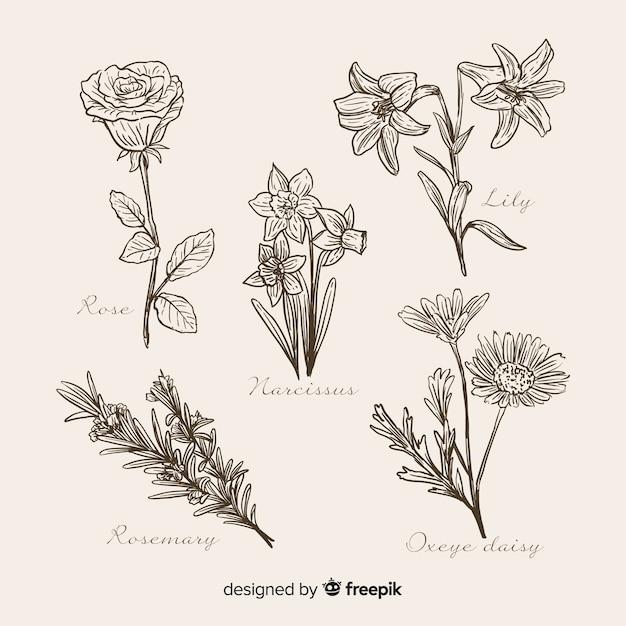 Realistische hand gezeichnete botanische blumensammlung Kostenlosen Vektoren