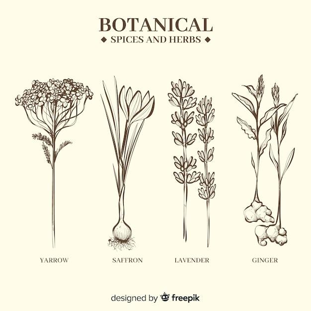 Realistische hand gezeichnete botanische gewürze und kräuter Kostenlosen Vektoren