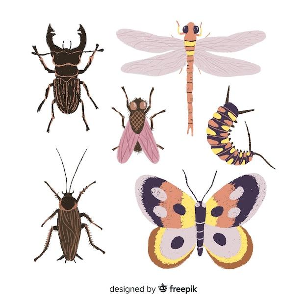 Realistische hand gezeichnete insektensammlung Kostenlosen Vektoren