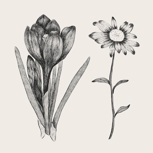 Realistische hand gezeichnete weinlesebotanik-blumensammlung Kostenlosen Vektoren