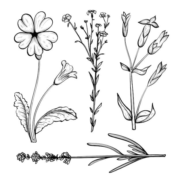realistische handgezeichnete kräuter  wildblumen pack
