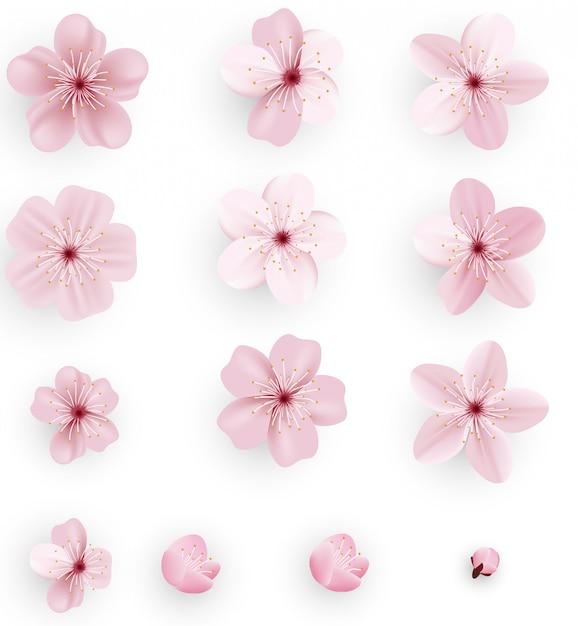 Realistische kirschblüte oder kirschblüte Premium Vektoren