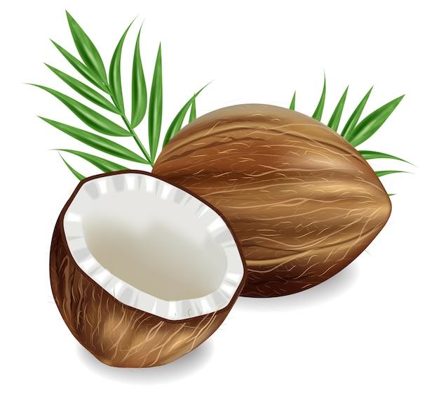 Realistische kokosnüsse isoliert Premium Vektoren