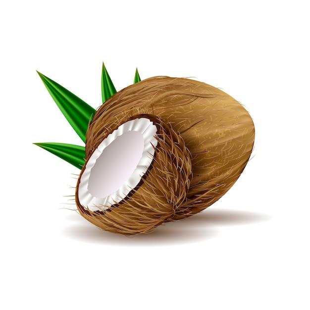 Realistische kokosnussillustration Kostenlosen Vektoren