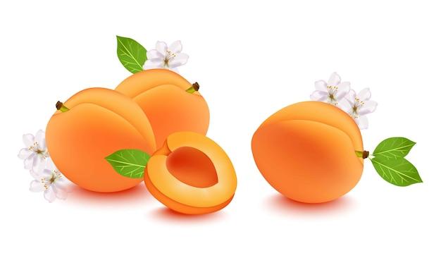 Realistische pfirsich- und blumenblüte. frisches obst auf weißem hintergrund Premium Vektoren