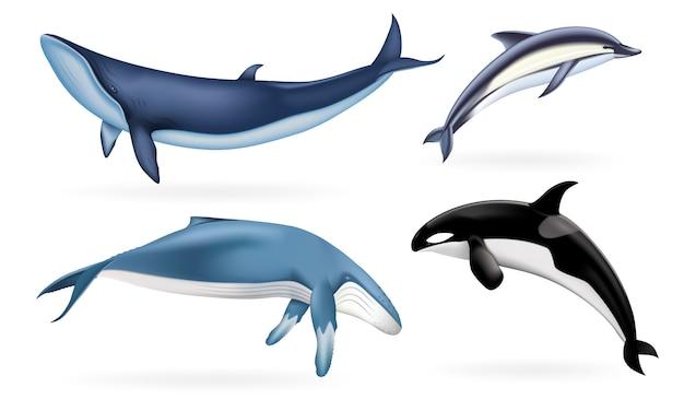 Realistische reihe von walen, delfinen und orcas Premium Vektoren