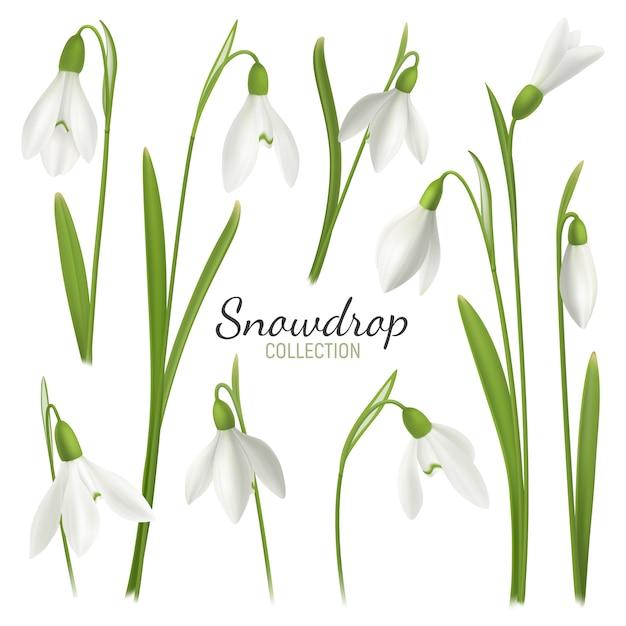 Realistische schneeglöckchenblume stellte mit editable text und bildern von februar-messemädchen auf leerer hintergrundillustration ein Kostenlosen Vektoren
