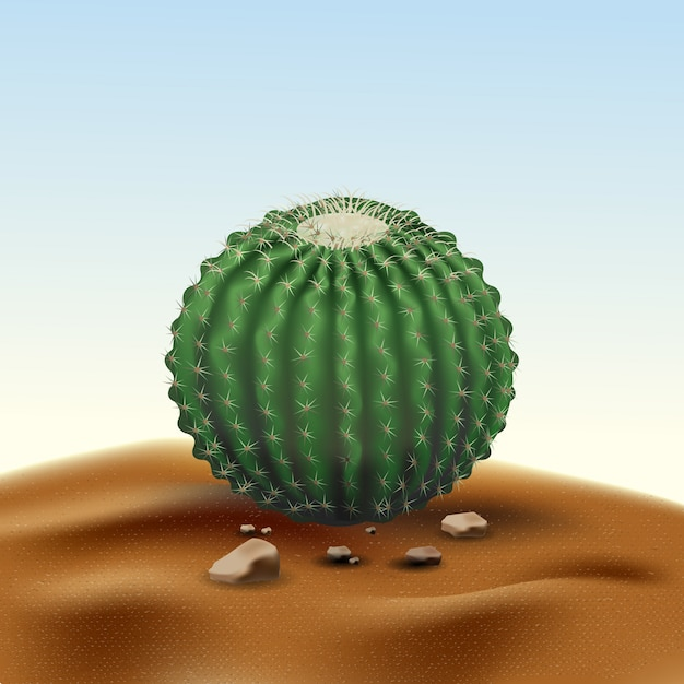 Realistischer großer runder kaktus echinocactus der wüste. anlage der wüste unter sand und felsen im lebensraum Premium Vektoren