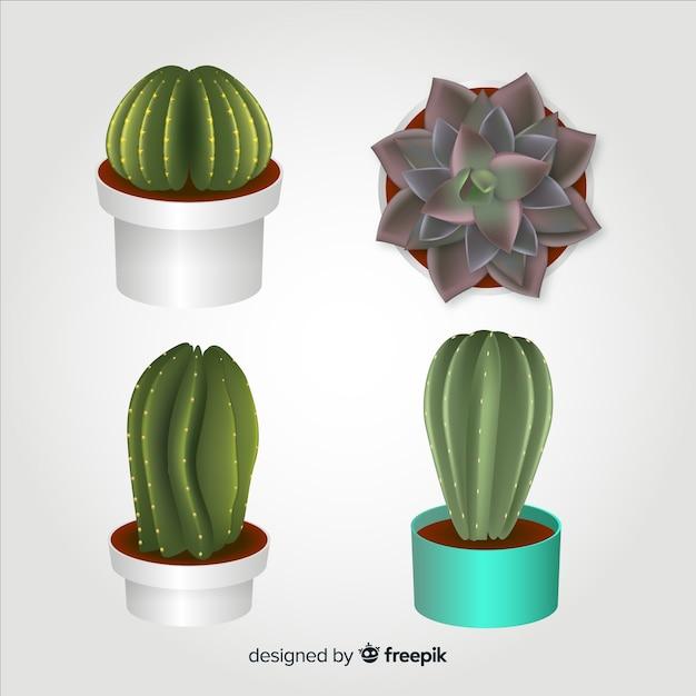 Realistischer kaktus vier dargestellt, getrennt Kostenlosen Vektoren