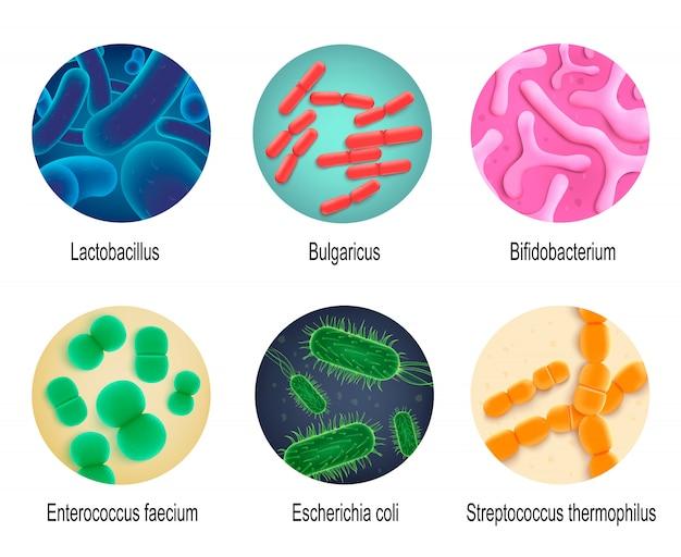 Realistischer vektor-satz des symbiotischen menschlichen bakterien Premium Vektoren