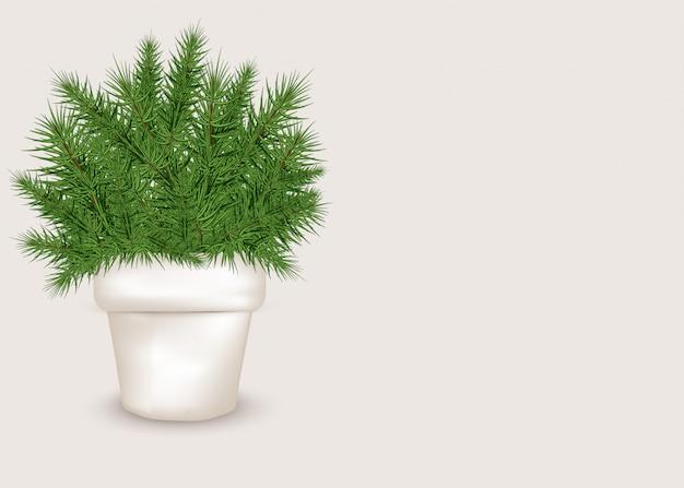 Realistischer weihnachtsbaum in einem weißen topf Premium Vektoren