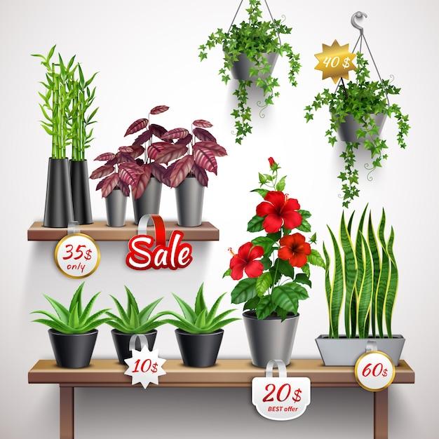 Realistisches ladenregal mit zimmerpflanzen und blumen Kostenlosen Vektoren