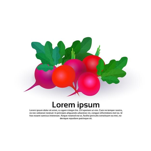 Rettich auf weißem hintergrund, gesundem lebensstil oder diätkonzept, logo für frischgemüse Premium Vektoren