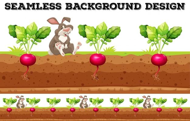 Rettich Kaninchen
