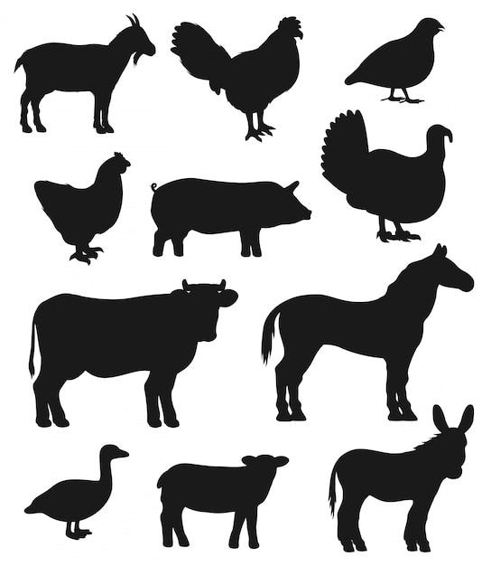 Rinderfarm tiere und vögel silhouetten Premium Vektoren