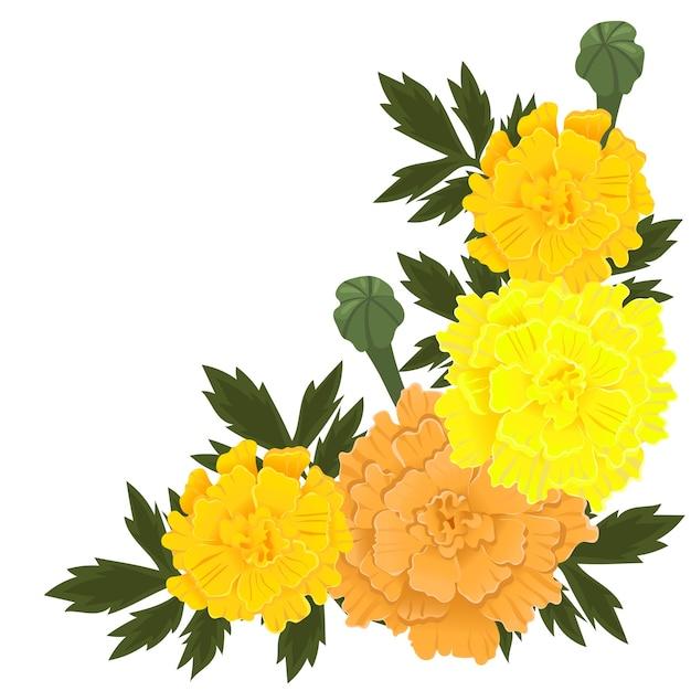 Ringelblumenblüten der gelben und orange farbe lokalisiert auf weißem hintergrund. Premium Vektoren