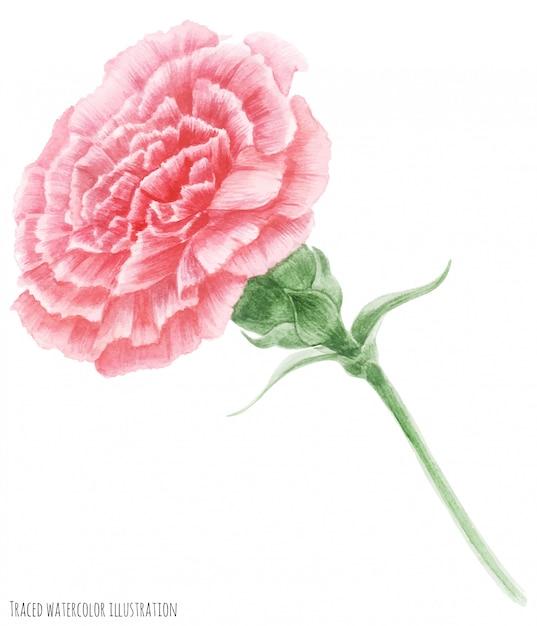 Rosa nelke symbol des muttertags Premium Vektoren