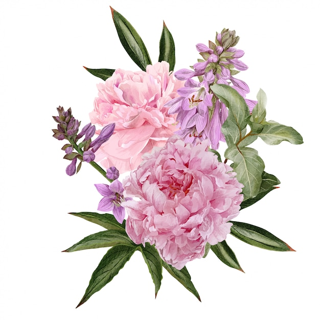 Rosa pfingstrosen, hosta-blüten und siverberry-zweig Premium Vektoren