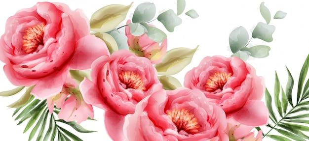 Rosa pfingstrosenaquarellsommerhintergrund Premium Vektoren