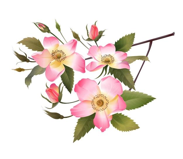 Rosa rosenstraußvektorillustration Premium Vektoren