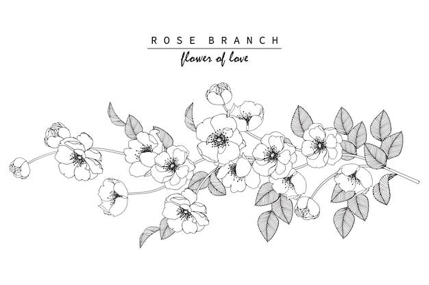 Rosafarbene Blumen Zeichnen Download Der Premium Vektor